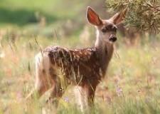 Ravenna. Il Fronte Animalista organizza la 'passeggiata' per sensibilizzare e contrastare il permesso di abbattere 67 daini.