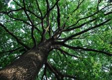 Rimini. La bolletta elettronica di Hera porta 100 nuovi alberi in città.