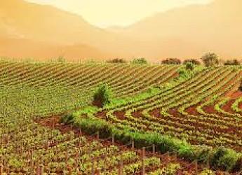 Emilia Romagna. Dalla Regione 10 milioni e 800 mila euro per biologico, biodiversità e tutela del paesaggio.
