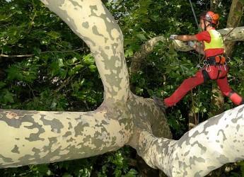 Ravenna. Approvato il progetto di verifica della stabilità degli alberi.