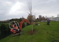 Forlì – Cesena. Hera rilancia sull'iniziativa 'Regala un albero alla tua città' con mille nuovi alberi. In regione piantumati 2mila alberi.