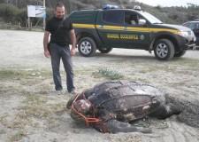Emilia Romagna. Rimini: Guardie ecozoofile, per la salvaguardia di animali, natura e ambiente.