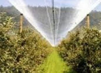 Emilia Romagna. Una regione 'dop'. Nel primo trimestre 2015 l'export agroalimentare è cresciuto del 4,5%.