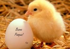 Ravenna. A Carraie la tradizionale festa di Pasqua per adulti e bambini.