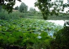 Bassa Eomagna. Sabato 17 e domenica 18 maggio: ' tour verde' con full immersion nell'ambiente.