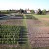 Rimini. Le Acli promuovono la coltivazione degli orti mettendo a disposizione un terreno, un incontro per chi è interessato.