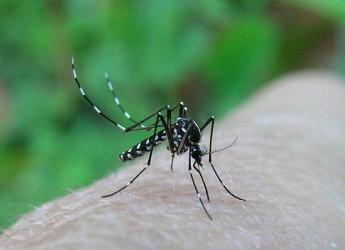 Faenza. Lotta alla zanzara tigre. Ora si può comprare il larvicida nelle farmacie e nei centri specializzati.