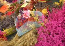 Tradizioni. Tra i profumi rari dei Giardini di Sissi. Per cogliere lavanda, ora, in piena fioritura.