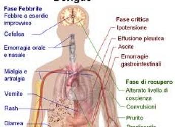 Salute.Infezione dengue: ma in futuro si dovrà stare più attenti specie ai paesi del bacino del Mediterraneo?