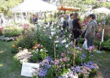 Riccione: Giardini d'autore alla prova d'autunno. In due giorni oltre 6000 visitatori  alla Villa Lodi Fè.