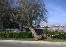 Maltempo: raffiche di vento nel Riminese e  gli alberi caduti nella notte. I danni maggiori sul lungomare Nord.