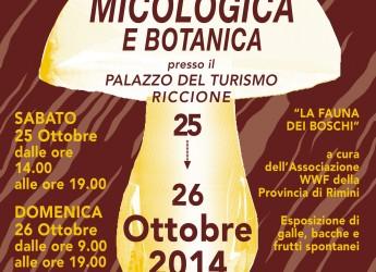 Riccione. Mostra micologica e botanica al Palazzo del Turismo sabato 25 e domenica 26 ottobre.