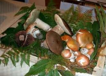 Rimini. Funghi. Si riduce l'attività dello sportello micologico di Rimini. Far controllare i funghi prima di consumarli.