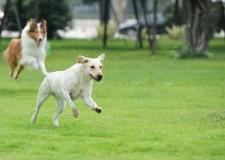 Fusignano. Bau run. Domenica in scena la camminata a 'sei zampe' per cani accompagnati.