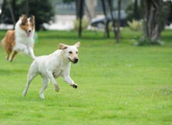 Ravenna. Al via un corso per proprietari di cani. Cinque lezioni su tecniche di educazione e mobilità di relazione.