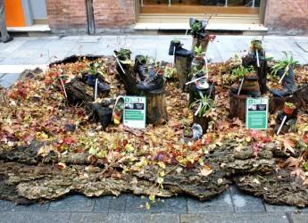 Faenza. In occasione della Nott de Bisò la premiazione del concorso legato ai giardini di Natale.