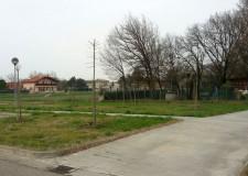 Massa Lombarda. In quattro mese sono stati piantati oltre 300 alberi, incrementato il patrimonio verde del comune.