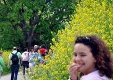 Valconca. Camminata tra i boschi e i rifugi del Rio Montepietrino tra Mondaino e San Teodoro. A metà percorso una grigliata per tutti.