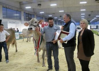 Reggio Emilia. Si è chiusa la 30ma edizione della Mostra Regionale Vacche da latte. Bilancio positivo per la partecipazione, soprattutto dei giovani.