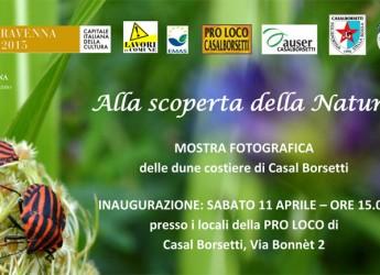 Ravenna. Mostra fotografica sulla 'scoperta della natura' a Casal Borsetti realizzata dalle 'magliette gialle' sulla duna costiera.