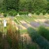 Casola Valsenio. Al via la stagione turistica con 'Erbe in fiore', una giornata didattica alla coperta delle erbe officinali.