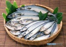Filo d'Argenta. Tutto pronto per la 31ma Sagra del pesce azzurro. Il ricavato in favore dello IOR.