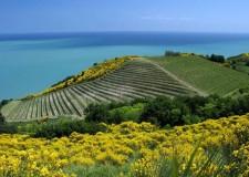 Pesaro. Una camminata a picco sul mare con degustazione di vino nel Parco del San Bartolo. Un trekking gustoso.
