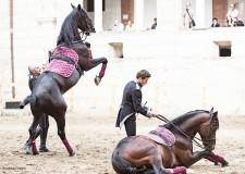 Ravenna. Al Ravenna Festival 'Saga IV. Il canto dei canti', l'opera equestre che porta in città un nuovo allestimento.