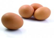 Unione Bassa Romagna. Rischio salmonella, fino al 30 settembre scatta l'ordinanza di divieto d'uso di uova crude.