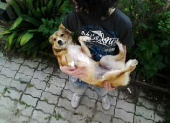 Italia. Lilla cerca casa, è un cane di piccola taglia di soli 7Kg. Ama i bambini ed è vaccinata e sarà affidata sterilizzata. Ora è in Calabria.