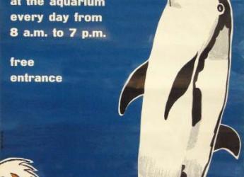 Cesenatico. Una mostra fotografica racconta la storia di Lalla, Palooza e degli altri delfini di Cesenatico. Uno sguardo insolito della nostra storia.