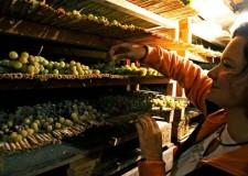 Dozza. Malvasia protagonista delle sere d'estate alla Rocca, il vino più aromatico della regione mostra i suoi tanti volti.
