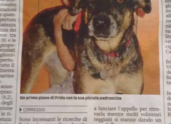 Correggio. Il cane Frida è scappata. La famiglia ha avuto un incidente in zona Correggio, chi avesse notizie può contattare i famigliari.