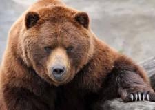 Italia & Mondo. Economia. 'La zampa dell'orso colpisce piazza affari'. (www.trend-online.com).