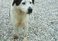 Marche. Paco è un cagnolino di 5 anni di taglia media, sembra un orsetto. Un amico ideale per una famiglia affettuosa.