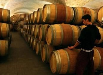 Rimini. San Patrignano. Grandi riconoscimenti per la cantina. Tre bicchieri a Avi 2011 e tre stelle alla stessa cantina della comunità.