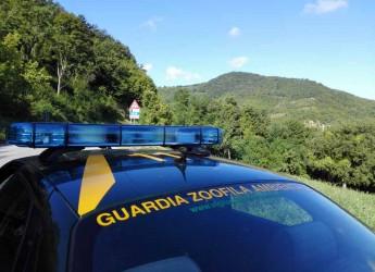 Misano Adriatico. Fine settimana di intenso lavoro per la Guardie Ecozoofile. Sanzionati due cacciatori 'fuori zona'.