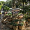 Riccione. I colori autunnali colorano la manifestazione Giardini d'Autore. Mostra mercato di giardinaggio dedicata a tutti gli appassionati.