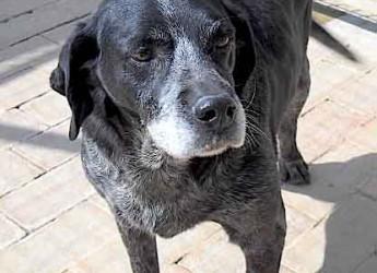 Marche. Adozione cani. Burro è un cane monto affettuoso e cerca quelle coccole che non hai mai ricevuto.
