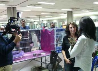 Forlì. Successo di pubblico per 'Animali in fiera'. Presenti anche le telecamere di 'Cronache animali' di Rai2.