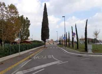 Gatteo. Il comune è più 'green', piantumati 28 nuovi alberi sul territorio in tre aree verdi urbane.