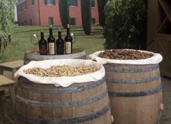 Cesena. Festa del vino con 'Podere Palazzo' che inaugura il nuovo punto vendita. Visite guidate e assaggi alle cantine.