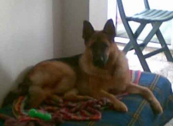 Italia. Adozione cani. Black è appena entrato in canile, ha tre anni e cerca stabilità.