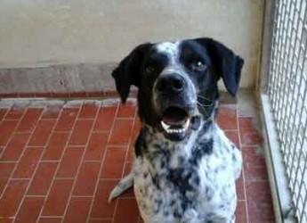 Italia. Marche. Adozione cani. Enea cerca casa, ama la compagnia ed è un cane gestibile e giocoso.