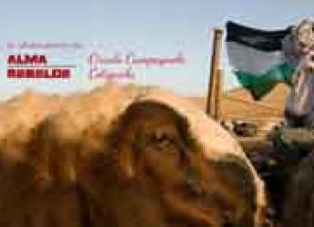 Cotignola. Al Circolo Campagnolo una serata per sostenere i pastori della Palestina.