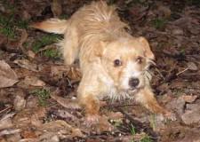 Italia. Marche. Adozione cani. Il padrone è morto, ora rimangono tre cagnolini da soli, mamma e due cuccioli.