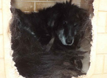 Italia. Adozione cane urgente. Tata ha 13 anni, tutti vissuti nel box. Non conosce nulla, aiutiamola a scoprire il mondo.