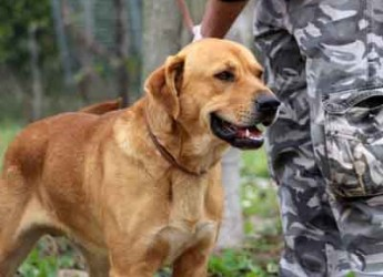 Italia. Roma. Cani in adozione. Zeno è meraviglioso, è stato abbandonato. Se non trova casa andrà diritto in canile.