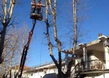 Faenza. Viabilità. Chiuso breve tratto della circonvallazione per la potatura e la messa in sicurezza di un albero.