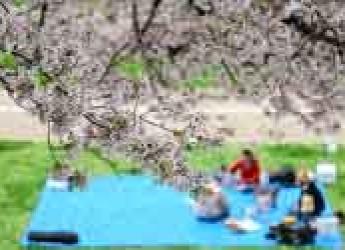 Italia & Mondo. Vacanze di primavera: dalla fioritura dei ciliegi in Giappone al lunedì grasso in Grecia.